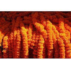 marigolds-genda-lachhi